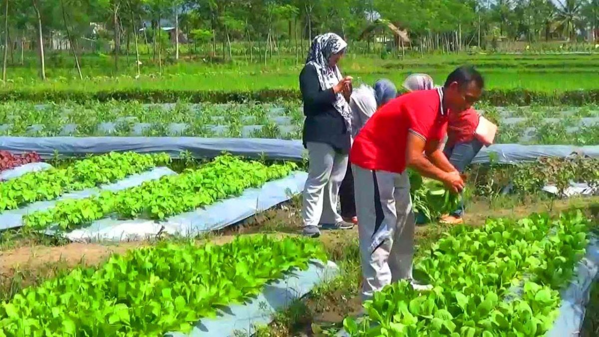 Penyebab Makanan Organik Lebih Mahal