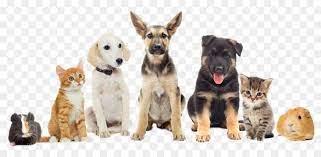 Manfaat Penting dari Pet Carrier