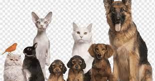 Merawat Hewan Peliharaan Anda: Tips Terbaik untuk Menunjukkan Anda Mencintai Hewan